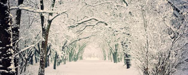 Зима уходит прочь