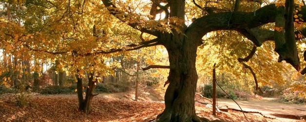 Осень как и я