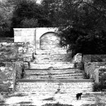 put-kota_foto-Cheshire-Cat