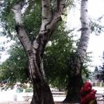 kerch-osen-foto-kerchanin_4